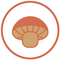 Website_Icons_Mushroom_USA